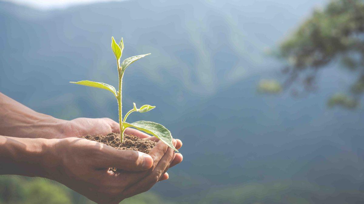 dlaczego warto dbać o środowisko i jak to robić